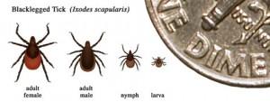 lyme disease control